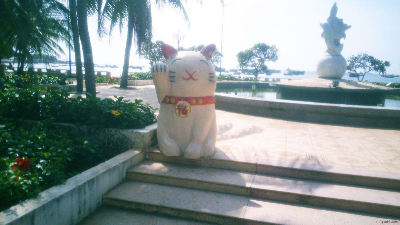 Vung Tau Cat