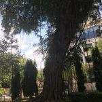 Independence Palace park