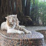 The Million Years Stone Park & Pattaya Crocodile Farm